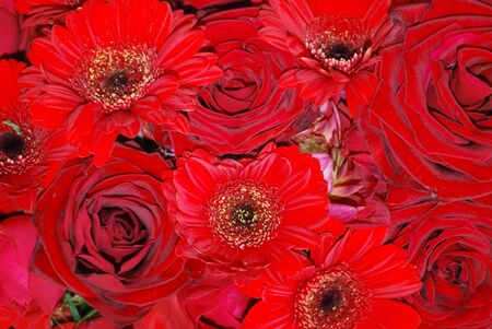 Farbe: red roses and gerbera in a bunch