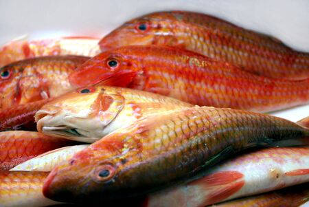 mullet: red mullet fishes on a market stall