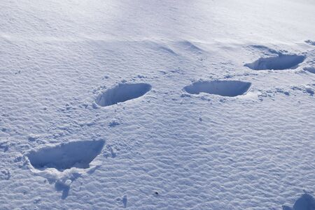 footprints in winter in the snow with blue shadows Stock Photo - 6149068