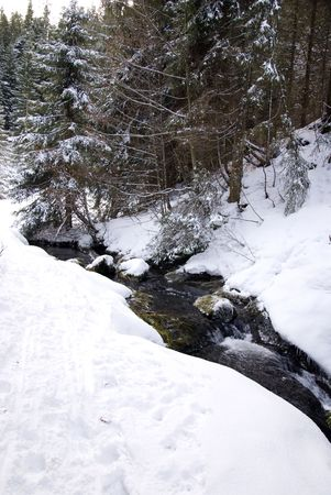allgau: mountain stream in winter landscape with snow