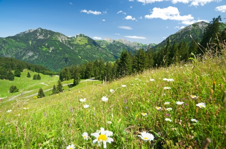 allgau: alpine flower meadow in allgau, bavaria, germany