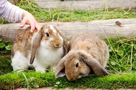 farm boys: child stroking  rabbits