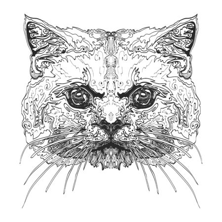 Feline head Illustration