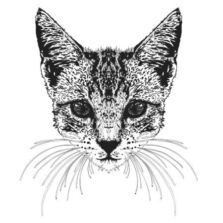 Feline head Vectores