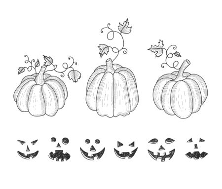Collection of graphic hand drawn pumkins for your design Illustration