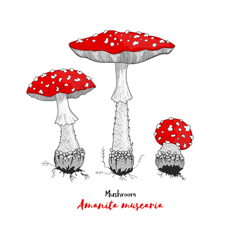Vector illustration. Amanita mushroom. Poisonous toadstool fly agaric. Decoration for greeting cards, posters, prints for clothes, emblems