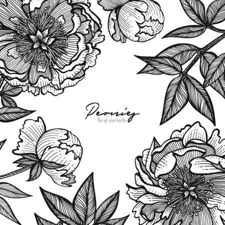 Graphic detailed frame with peony flowers and leaves. Vector illustration painted with clear lines. Romantic design template for cards, business cards, posts in social networks, inspirational quotes