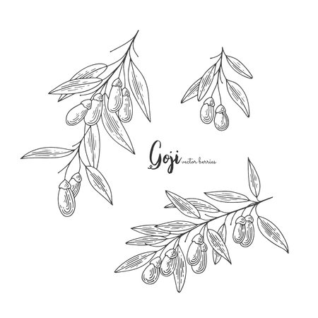 Goji berry vector drawing set. Isolated hand drawn illustration on white background.