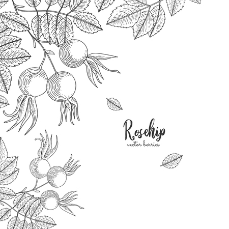 Detailed frame with rosehip. Isolated hand drawn illustration on white background. Ilustrace