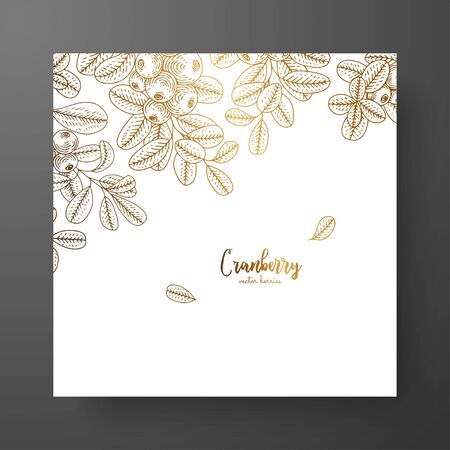 Gold card template for invitations, greeting cards, postcards, package design, or as a complement to a vintage project. Place for text vintage botanical engraving illustration of golden cranberry.
