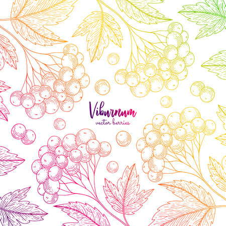 Colorful vector frame with viburnum. Healthy food design template with berries. Vegetarian food for label, packaging design, menu, cafe, restaurant, recipes, decoration kitchen items