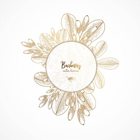 Gold vintage illustration with barberry.