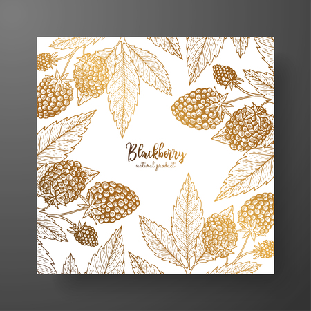 Cold card template with berries. Vintage engraving illustration of golden blackberry 일러스트