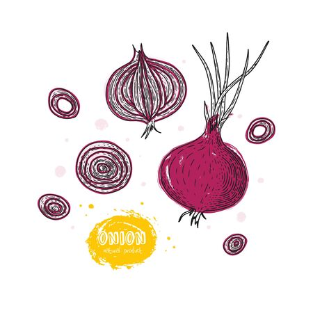 Onion hand drawn vector illustration in the style of engraving. Grunge illustration for create the menu, recipes, decorating kitchen items.  イラスト・ベクター素材