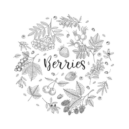 Berry vector circle with currant, cranberry, bluberry, cherry, raspberry, strawberry and etc. Healthy food design template with hand drawn berries. Great for design menu, recipes, poster