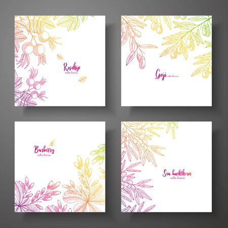 Set of colorful botanical cards with berries. Great design for natural and organic products. Vector vintage frame with rosehip, goji berries, barberry, sea buckthorn