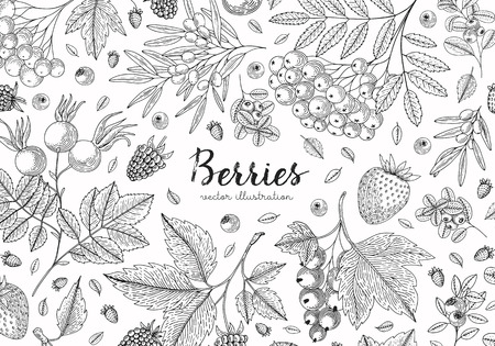 Berries collection top view illustration. Healthy food. Engraving sketch vintage style. Vegetarian food for design menu, recipes, decoration kitchen items. Great for label, poster, packaging design.