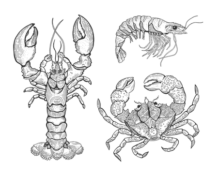 Hand drawn vintage graphic illustration with realistic lobster. Marine creature. Seafood elements for design menu, recipes, decoration kitchen items. Great for label, poster, packaging design.