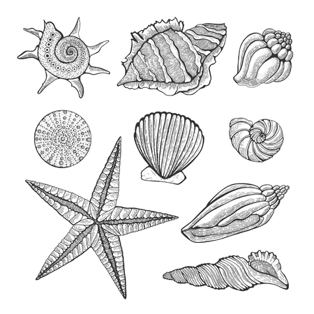 Hand drawn vintage graphic illustration with realistic seashells. Marine elements for design menu packaging design