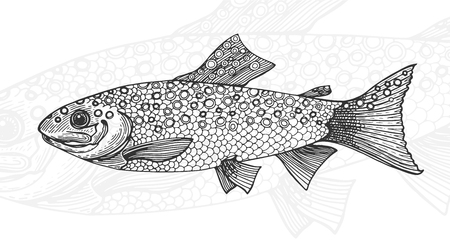 Hand drawn vintage graphic illustration with realistic rainbow trout. Healthy food. Marine creature. Engraving sketch vintage style. Templates for design sea shops, restaurants, markets. Vectores