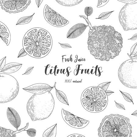 Organic citrus fruit banners. Healthy food. Engraving sketch vintage style. Vegetarian food for design menu, recipes, decoration kitchen items. Great for label, poster, packaging design.