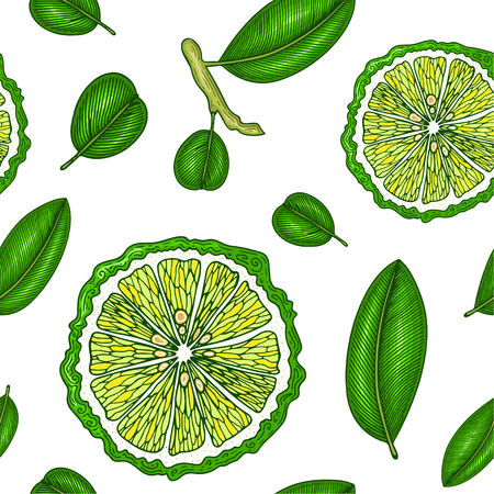 Seamless pattern with bergamot. Colorful wallpaper vector. Engraving sketch vintage style. Hand drawn illustration. Great for design menu, recipes, poster, label, print, packaging design.