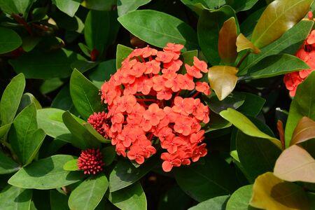 elixir: Elixir flower