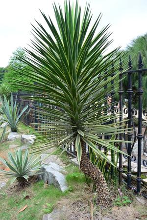 plantas del desierto: Plantas del desierto de Australia