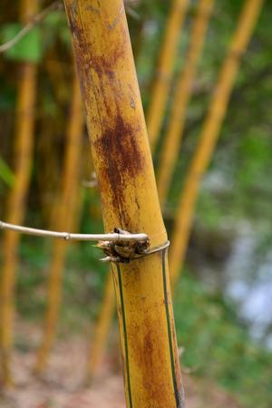 golden: Golden bamboo partition