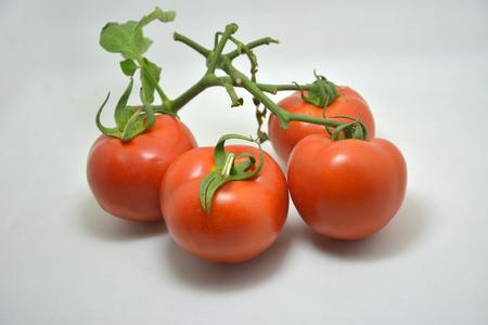Organic Tomatoes 스톡 콘텐츠
