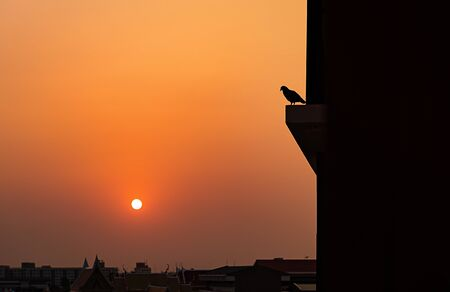 lonesome: Pigeons on balcony at sunset, use for feel lonely concept