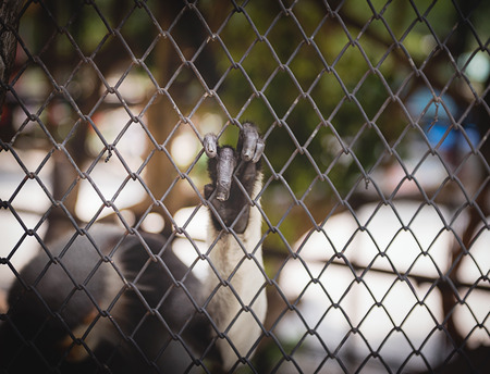 slammer: close up of hand of macaque in a cage Stock Photo