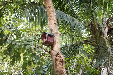 bird s house: wooden bird house on the tree