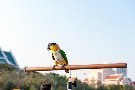 mccaw: Beautiful and colorful parrot Stock Photo