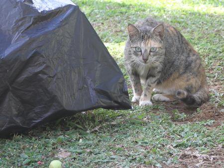 crouched: Wary stray cat next to garbage bags