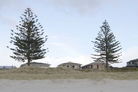 beachfront: Houses and trees at the beachfront near Mt. Maunganui, New Zealand