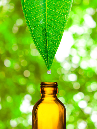 Herbal alternative medicine water drop falling down from a leaf to the bottle Stockfoto