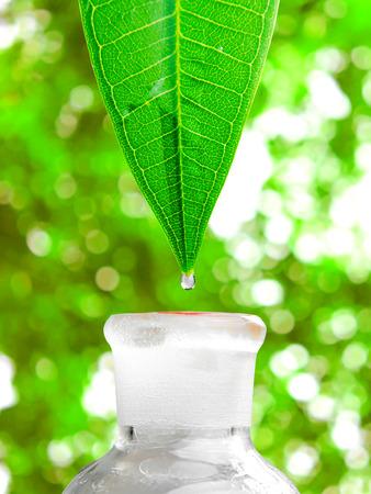 허벌 대체 의학 워터 드롭 병에 잎에서 아래로 떨어지고 스톡 콘텐츠