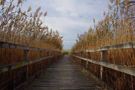 Wood walkway through reeds in Virginia beach