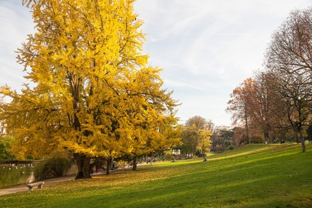 A huge tree with yellow leaves at the foot of a green slope by the lake in Montsouris Park, in Paris on a sunny, clear autumn day
