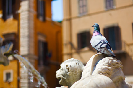 Pigeon on faontain sculpture  in Roma, with colorful houses on the background