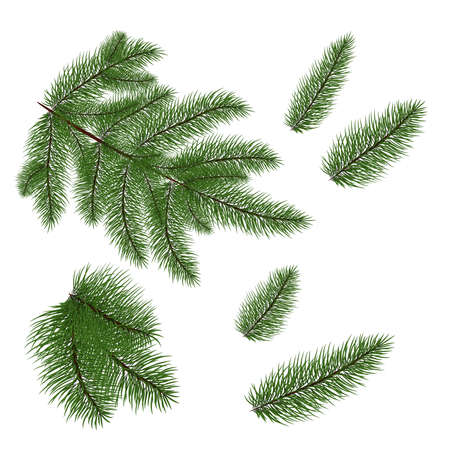 set of Christmas tree branches for a Christmas decor. Branches close-up. Vector. Drawing. Nature details.