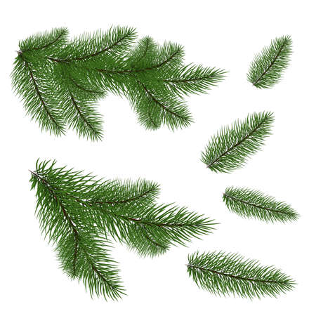 set of Christmas tree branches for a Christmas decor. Branches close-up. Vector. Drawing. Nature details. Zdjęcie Seryjne