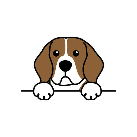 Cute beagle dog paws up over wall, dog face cartoon, vector illustration