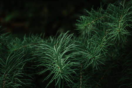 Part of nature. Balashiha forest. Russian Federation