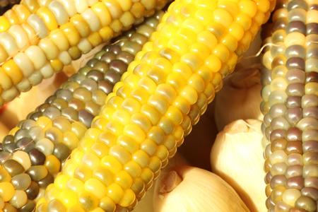 shelling: Yellow corn shelling