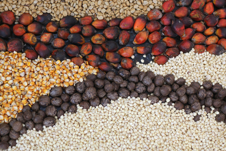 seeds of various: Various seeds and grains