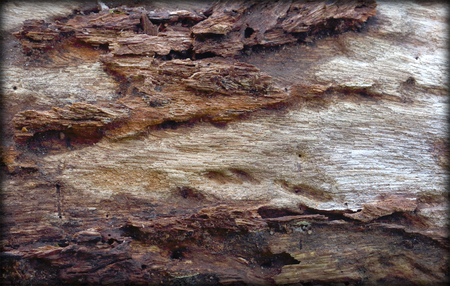 decayed: Decayed wood