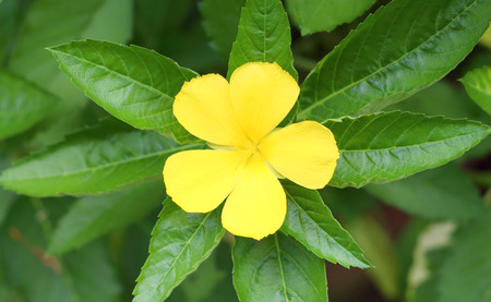 Yellow flowers with green leaves.