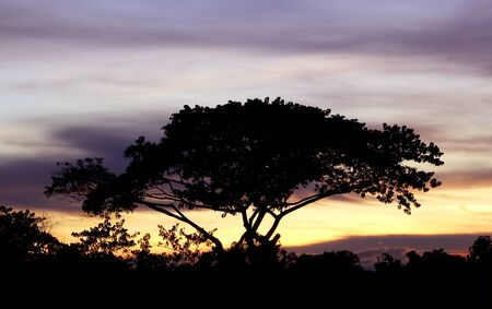 rooted: Tree during sunset